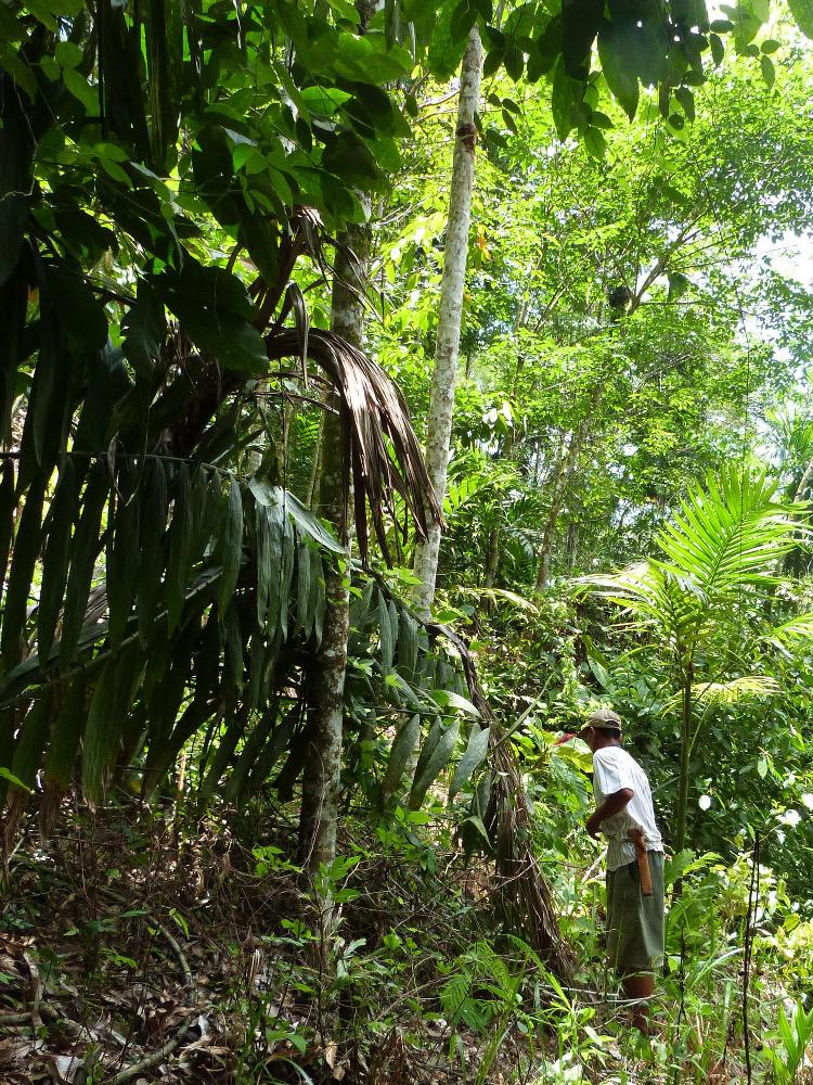 Dans la jungle indonésienne